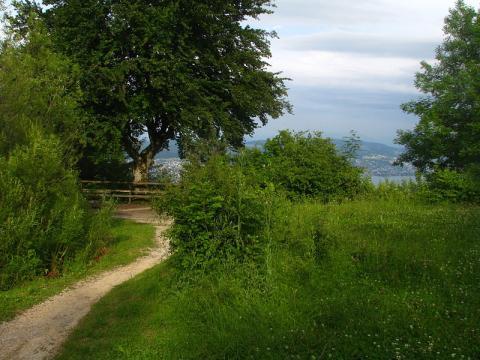 suiza-naturaleza.JPG